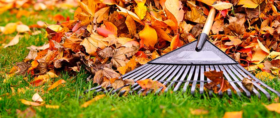 Why It's Time to Schedule a Fall Lawn Cleanup