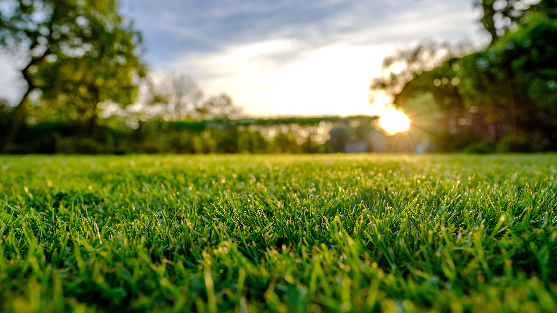 Lawn mowed, fertilized and maintained by J&C Lawn Care in Happy Valley, OR