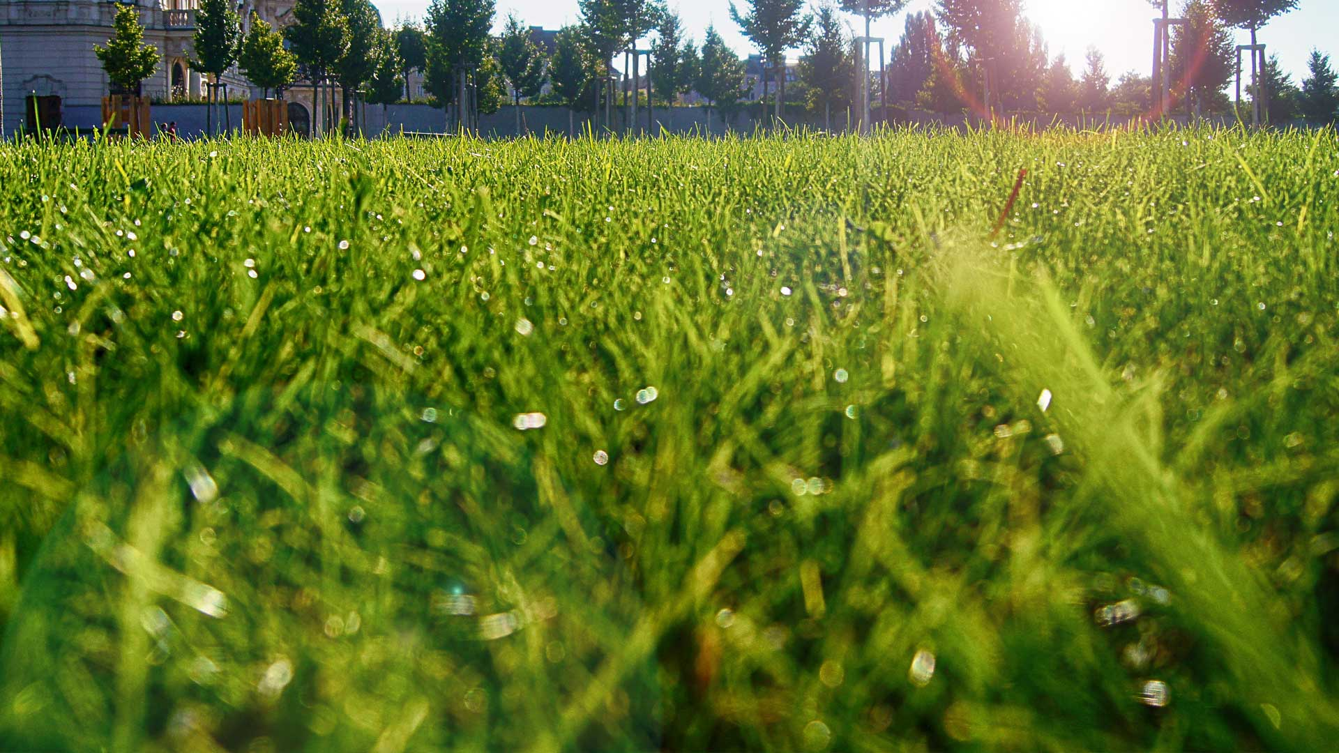 Close up photo of a recently mowed lawn in Gresham.