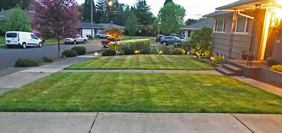5 Reasons Mowing Your Lawn Is More Important than You Think
