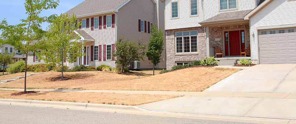 How to Tell If Your Lawn Is Dead or Just in Its Dormant State