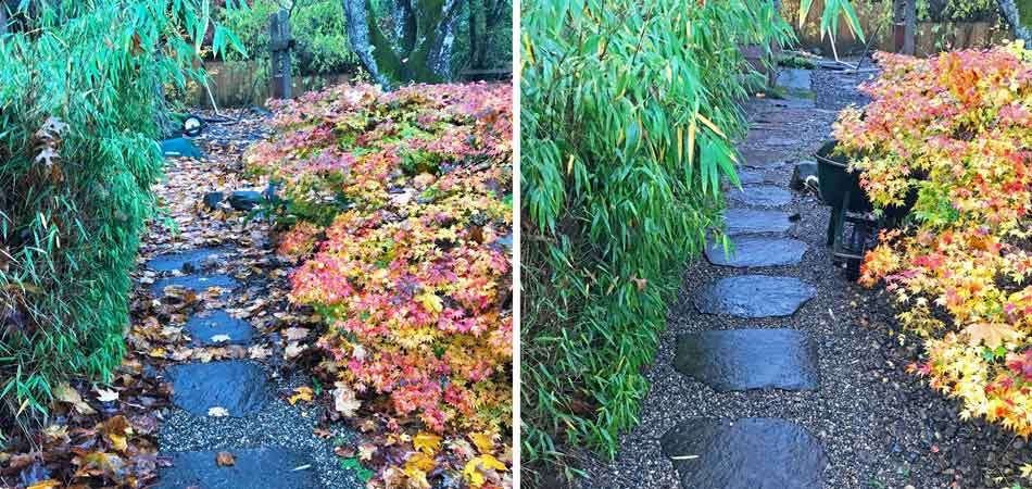 Before and after fall yard cleanup in Gresham, OR.