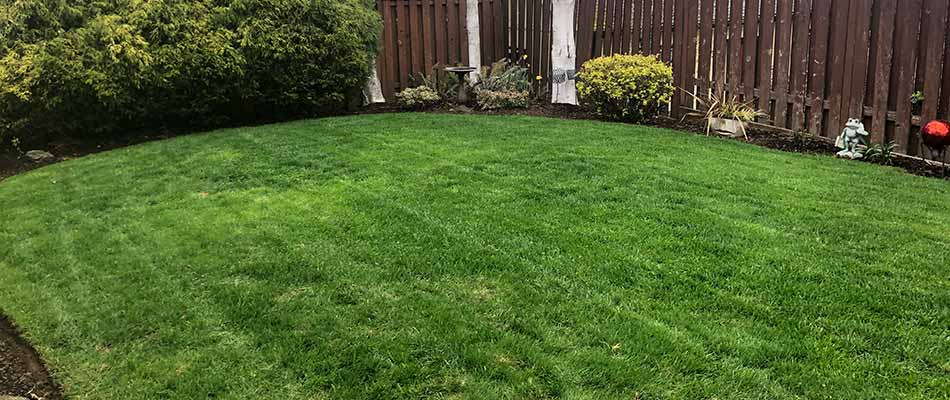 How Spring Fertilization Prepares Your Lawn for Summer