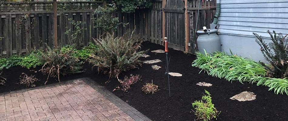 Project Case Study: Neglected Residential Lawn Cleanup