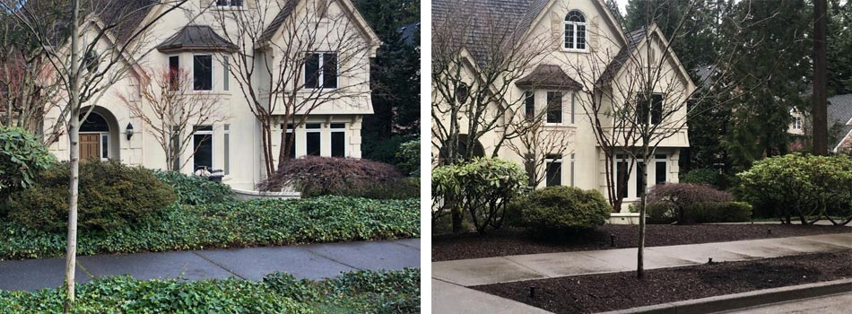 Before and after ivy removal services in Happy Valley, OR.