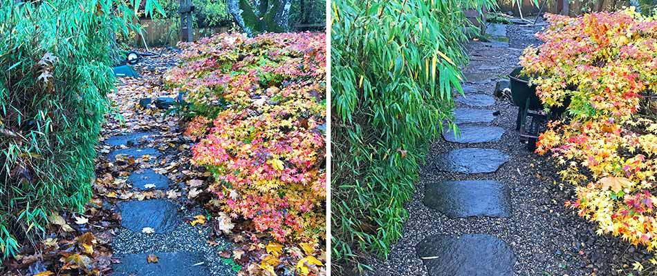 Before and after photos of a fall yard cleanup in Fairview, OR.