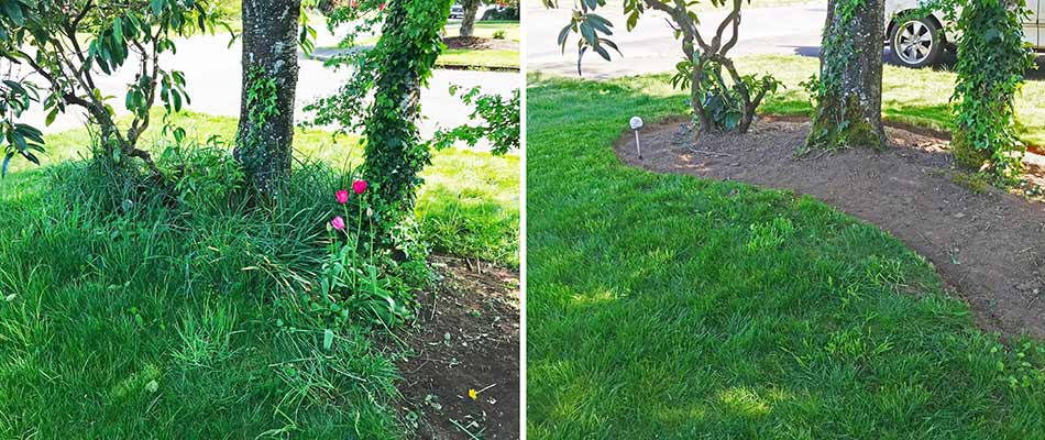 Before and after photos of an overgrown landscape bed cleanup in Gresham, OR.