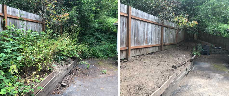 Before and after blackberry removal services in Gresham, OR.