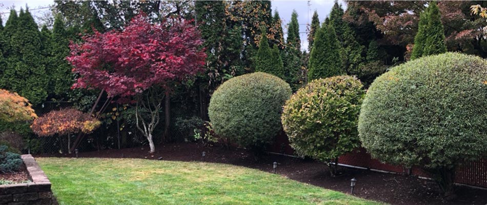 Home with beautifully trimmed shrubs and hedges in Happy Valley, OR.