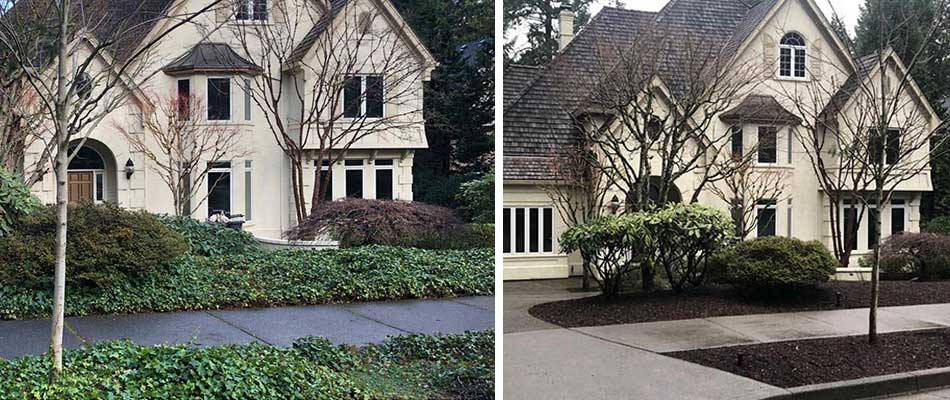 Before and after photo of ivy removal services in Beaverton, OR.
