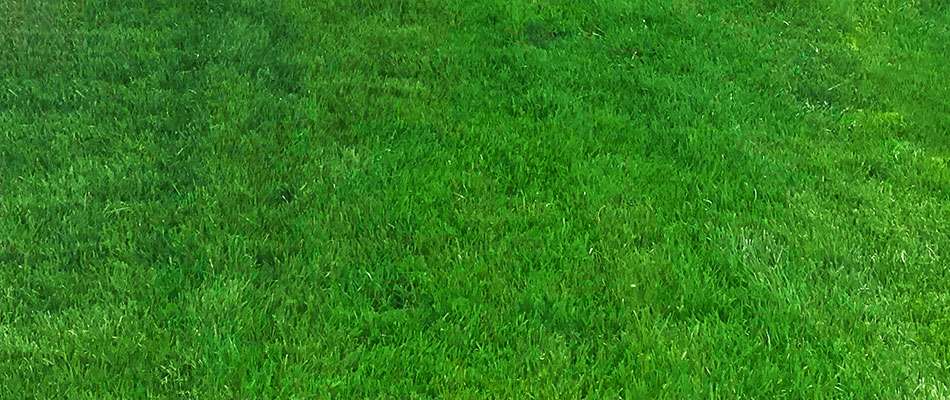Lawns in Gresham look healthier and greener after the aeration process.