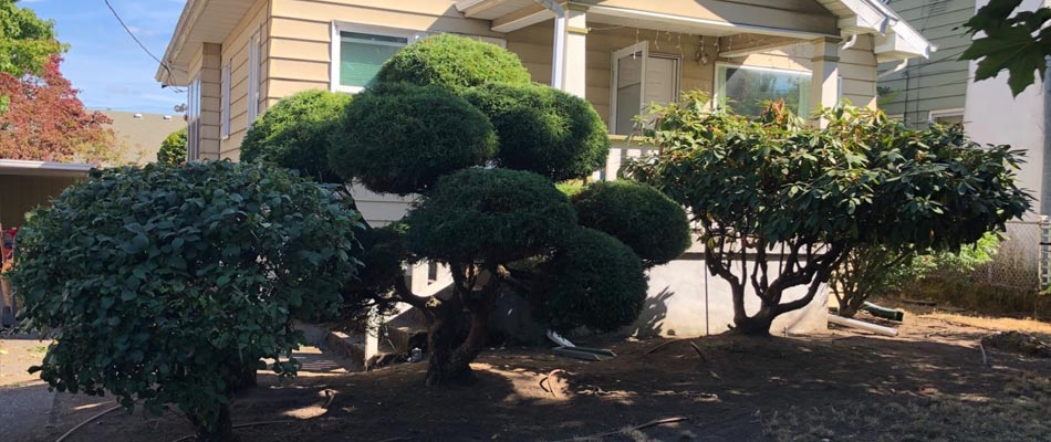 Small decorative tree and shrub trimming at a residential property in Happy Valley, OR.