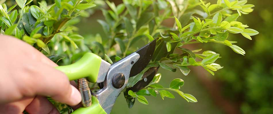 How Plants Benefit from Regular Trimming & Pruning