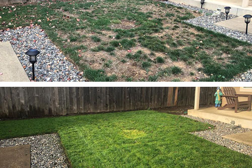 Yard in East Portland, OR after core aeration and overseeding service.