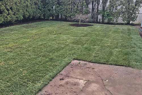 A new sod installation at a Happy Valley home.